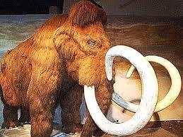 mammut3